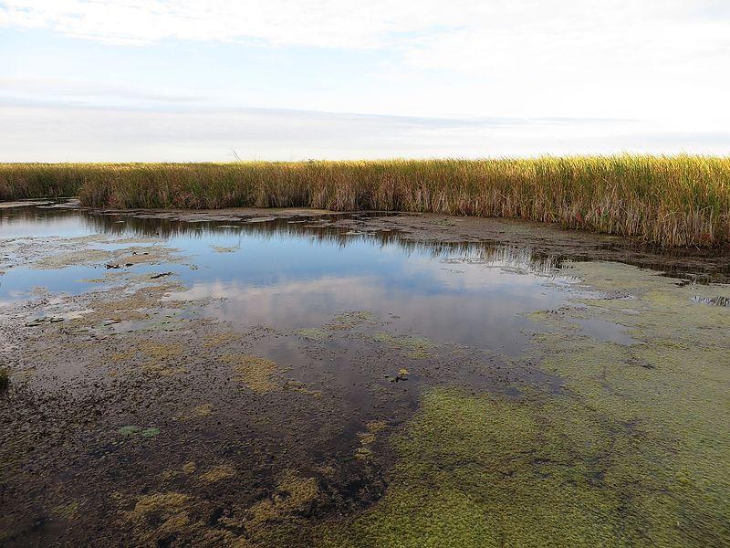File:Marsh Boardwalk, Point Pelee National Park, Leamington, Ontario, Canada (21774274005).jpg