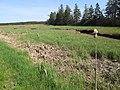 Marshes near Mount Stewart, PEI (14129590820).jpg