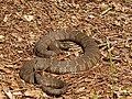 Mattaponi Wildlife Management Area, Virginia (7468020058).jpg