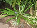 Matthaei Botanical Gardens - IMG 8985.JPG
