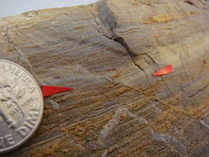 Fault (geology) - Microfault showing a piercing point (the coin's diameter is 18 mm)