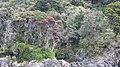 Milford Sound, South Island - panoramio (9).jpg