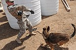 Military Working Dogs training in Baghdad, Iraq DVIDS173892.jpg