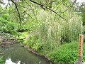 Mill Brook - Concord, MA - IMG 1047.JPG
