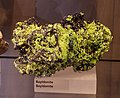 Mineral exhibit - Bayldonite (32168804785).jpg