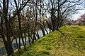 Momiji-machi, Matsuyama City - panoramio.jpg
