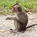 Monkey on the road.jpg