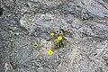 Multitude In Yellow (164909435).jpeg