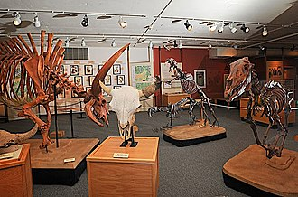 Idaho Museum of Natural History - A few of the earth science exhibits on display at IMNH
