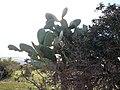 Nature des Monts Beni Chougranes Mohammadia 14.jpg