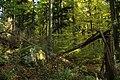 Nature reserve Ptaci stena in autumn 2011 (18).JPG
