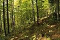 Nature reserve Ptaci stena in autumn 2011 (33).JPG