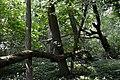 Naturschutzgebiet Haseder Busch - Im Haseder Busch (14).jpg