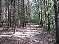Naturschutzgebiet Storkower Kanal 11.jpg