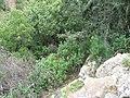 Nesher, Park Nesher, Wadi Katia 056.JPG