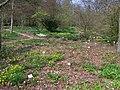 Neuer Botanischer Garten - Frühlingswald 02.jpg
