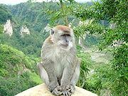 Maimuţele îşi pot mişca muşchii paralizaţi cu ajutotul minţii
