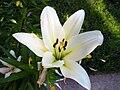 Nice White Flower.JPG