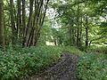 Nieste-Werra-Weg Ingelheimbachtal.JPG