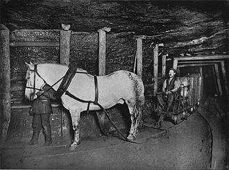 Pit pony - Pit pony in Germany, 1894