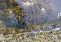 Noeufossé algues avril2002 roche.jpg