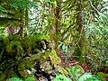 North Cascades National Park (9290009033).jpg