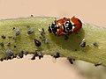 Nostres amics, els insectes - Nuestros amigos, los insectos - Friends insects (5169062206).jpg