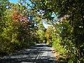 Oakdale, NY, USA - panoramio.jpg