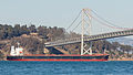 Ocean Life in the San Francisco Bay-0438.jpg