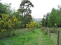 Offa's Dyke Path through Hilltop Plantation - geograph.org.uk - 438511.jpg