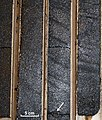Oil Sand Drill Cores.jpg