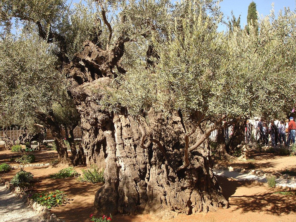 Getsemani Wikiquote