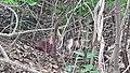 Osun Sacred Grove Forest - Flower -Tosin Odunfa.jpg