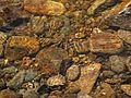 Otava river detail 2.JPG