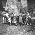 """Otroci se igrajo """"konje"""" s podkvami na rokah, Robidišče 1951 (2).jpg"""