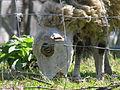 Ovelha Ovella Oveja GFDL02.jpg