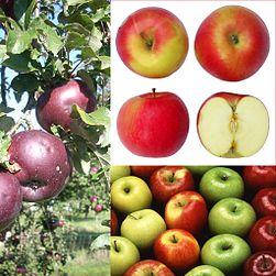 cuantas calorias tiene una manzana verde de 200 gramos