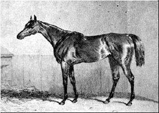 Oxygen (horse) British-bred Thoroughbred racehorse