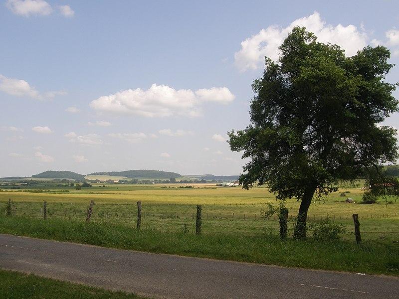 Commune de Réville-aux-Bois (département de la Meuse). Haut du lieu-dit «la Pillière». Parcelle ZD 68.