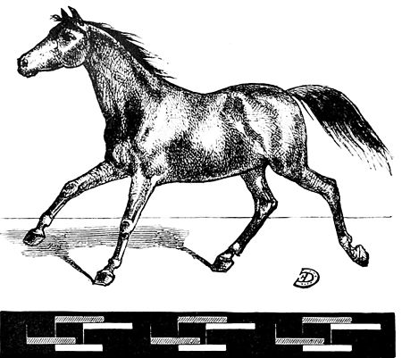 PSM V06 D152 Horse galloping in second time.jpg