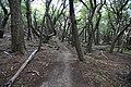 Pabukové lesy - panoramio.jpg