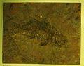 Palaeoperca proxima 4.jpg