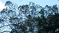 Pambadum Shola National Park - panoramio (9).jpg