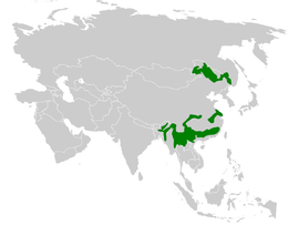 Paradoxornis distribution map.png