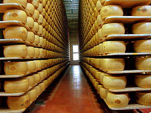 Food industry - Parmigiano reggiano cheese in a modern factory