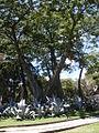 Parque del Este 2012 039.JPG