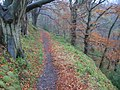Path in Clyde Valley Woodlands Nature Reserve - geograph.org.uk - 617241.jpg