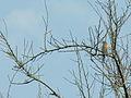 Paxaro.bird.GFDL.jpg