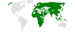 Phylloscopus distribution map.png