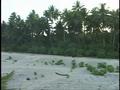 Pikelot beach.png